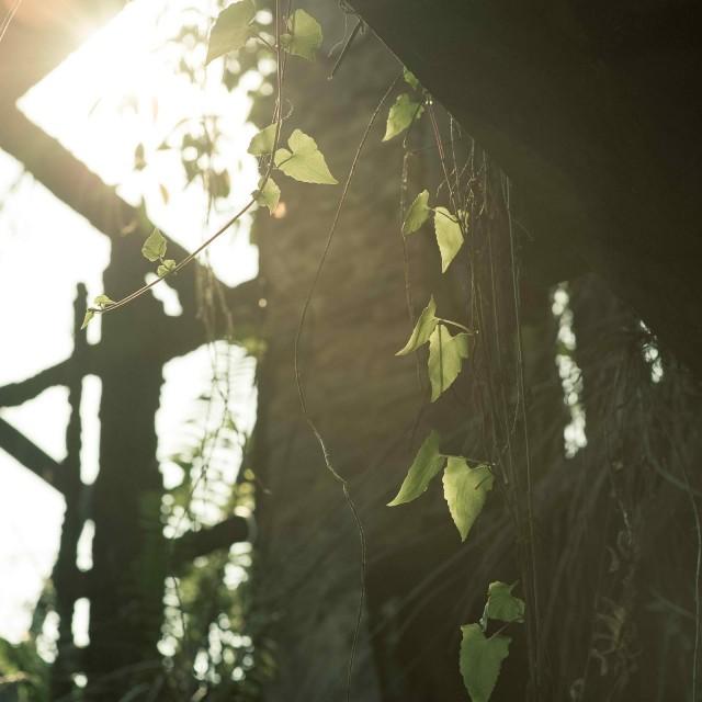 Abandon House (Don't be afraid of light)