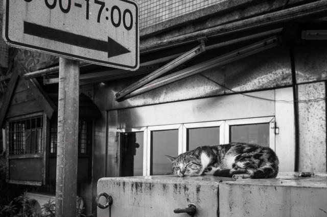 慵懶享受著九份溫柔晨光的貓