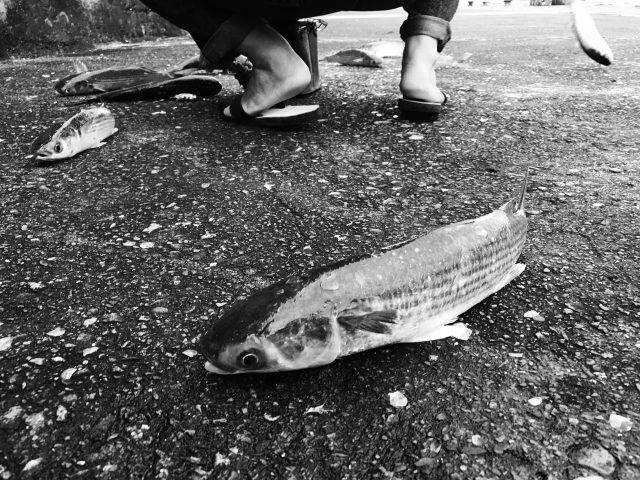 鱼 • 生