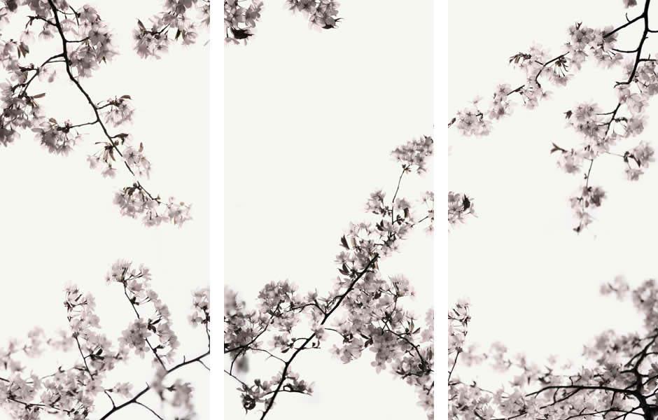 Sakura Triptych